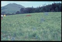 104/81. Looking west north west [Lekkerwater (Konnikramer) - Mapoch][198]