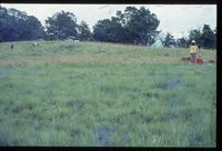 115/81 [Farm Driefontein. Tungay's Property - Northern boundary with Cathkin Valley Chalet Scheme]