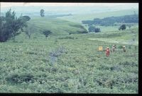 116/81 [Farm Driefontein -Tuygay - ' 200m below (i.e. south east of) track leading to chalets & ' 700m from boundary gate]