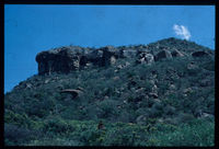Black Eagle nest at Mpanza near Greytown